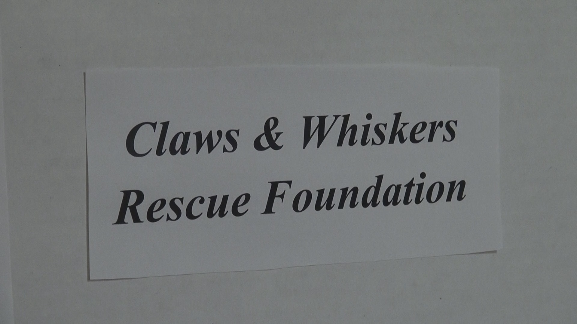 Claws & Whiskers Bingo.jpg