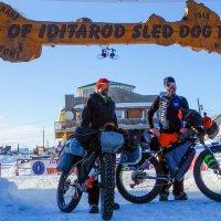 Iditarod_1552933320748.jpg
