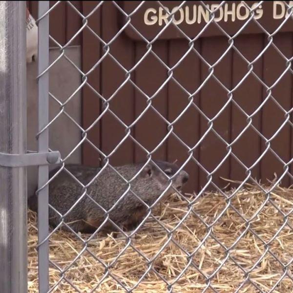 Roaming WV Upshur County Groundhog Day_1558043867817.JPG.jpg