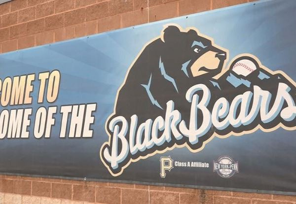 black bears_1558668028551.JPG.jpg