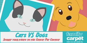 Cats VS Dogs Photo Contest