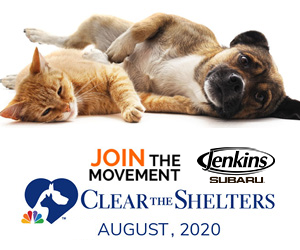 Clear the Shelters sponsored by jenkins subaru
